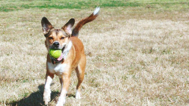 Just her and her Ball PureJoy Prettypuppy DogParkLife