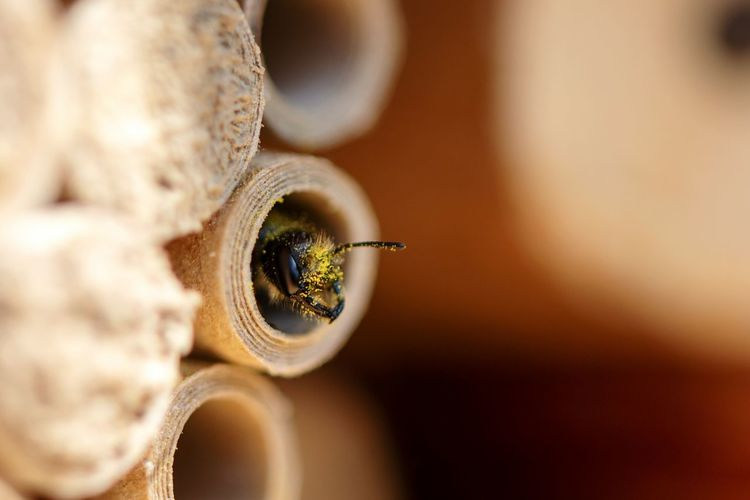 Hi there... Nesting Fragility Bee Wild Bee Solitary Bee Nest Nesting Aid Tube Macro Macro Insects Springtime Looking Out Animal Themes Animals In The Wild One Animal Animal Antenna Insects  EyeEm Selects Eyesight Close-up Magnification Hole Cell Insect
