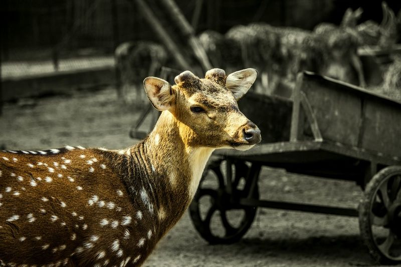 Photography Wildlife & Nature Deer Beautiful Nature Beauty Of Nature Depth Of Field Delhi India