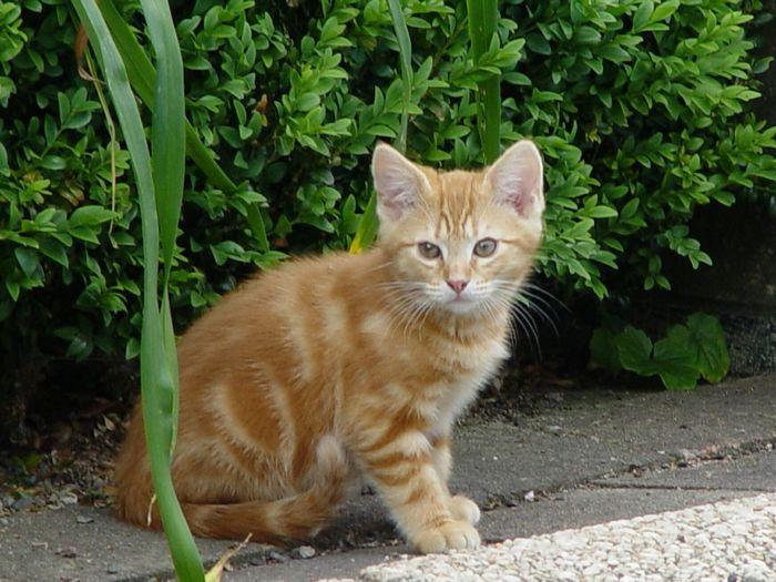 Cat Sitting On Leaf