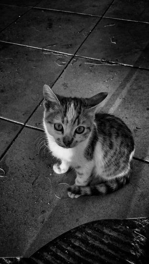 Catstagram Catlady Cat Eyes Cat Catoftheday Kediler Kedi Cat Lovers Hi! Hello World Enjoying Life Relaxing Kedicik Kedi Aşkı Minik Kedicik