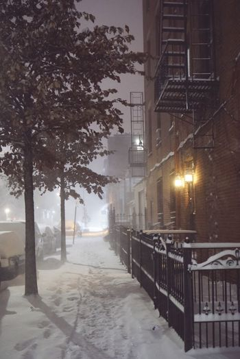 Cold Temperature Snow Illuminated Winter Tree Weather Street Light The Way Forward Built Structure Building Exterior City Snowing Outdoors Nature Architecture No People Night Sky Snow Day Brooklyn New York Brownstone Snow ❄ Winter Cobblestone