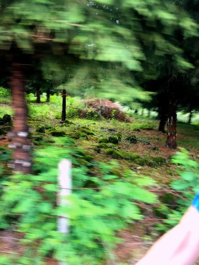 Tree Blurred Motion Plant Growth Tranquility Nature Green Color Outdoors Day Tranquil Scene Beauty In Nature Multi Colored Park Blur Footpath Graveyard Beauty Death