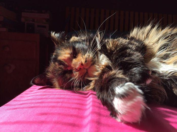 View of cozy cat