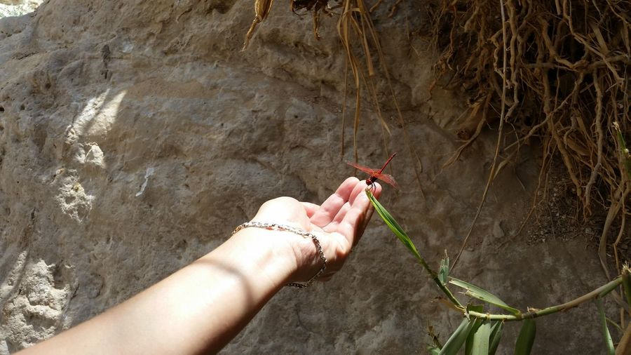Cropped hand of woman touching dragonfly