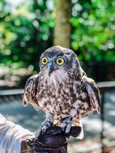Master the art of observing Portrait Big Eyes Bird Bird Of Prey Animal Wildlife Animals In The Wild Owl
