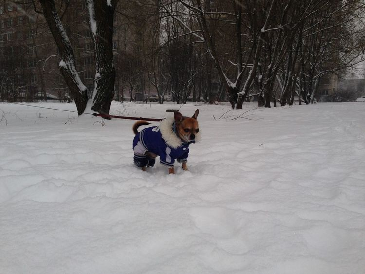 Snow Warm Clothing Pet Chihuahua Cute Dog Winter Winter Clothes Pet Clothes No Filter, No Edit, Just Photography