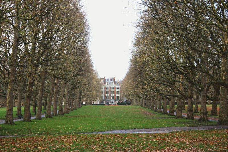 England🇬🇧 London Grass Trees Avenue Nicetrip Taking Photos Photowalk