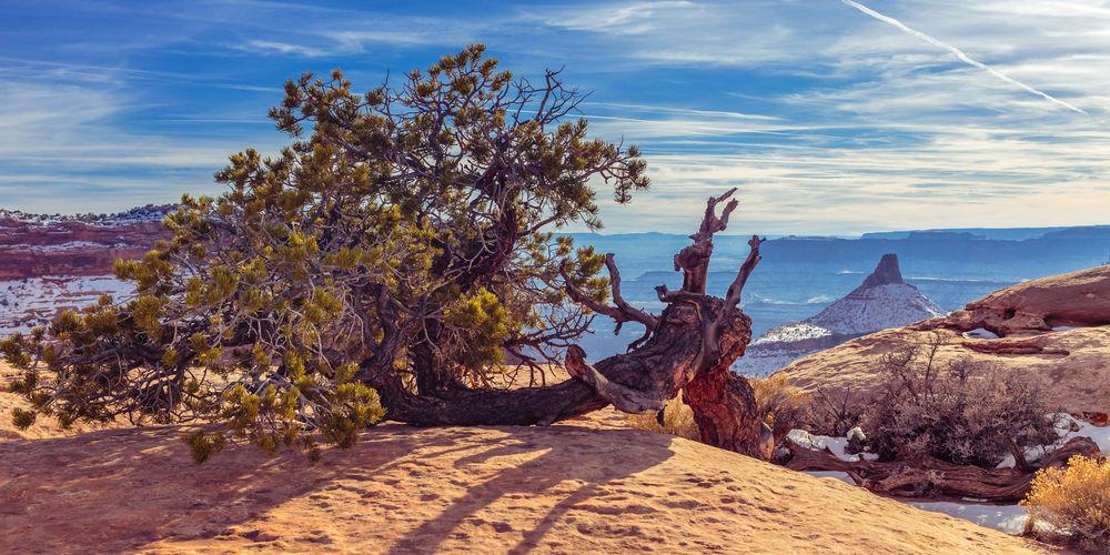 Fallen Tree On Rock Against Sky