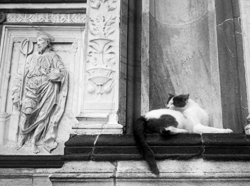 Non solo arte nelle chiese. Cat Monochrome Taking Photos