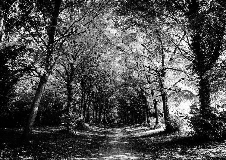 La même en noir et blanc... Étonnant non? The same in black & white... Landscape Walking Around AMPt_community EyeEm Bnw