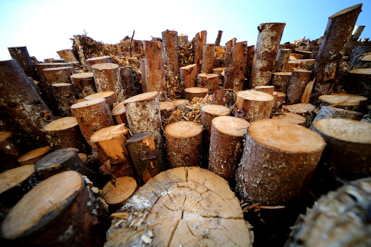 STACK OF FIREWOOD IN FIELD