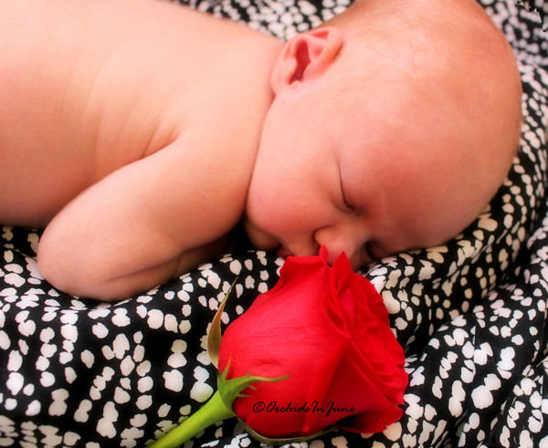 More photos from baby Amelia Roses' photo session. Please provide honest feedback. FirstTime Close-up Babygirl Virginia Canonphotography Firsttimeforeverything Newborn Photography Ilikeit Rose - Flower
