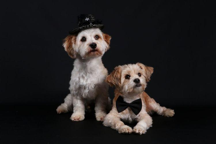 Puppies against black background