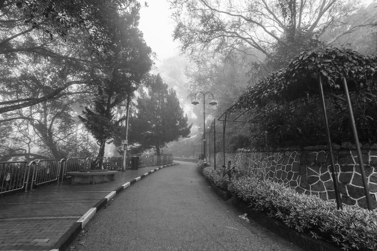 Foggy misty road indicating haunted in Penang Hill Tree Plant Direction The Way Forward Nature No People Growth Day Outdoors Footpath Penang Penang Malaysia Penang Island Transportation Road Diminishing Perspective Street Fog Tranquility Architecture Barrier City Treelined