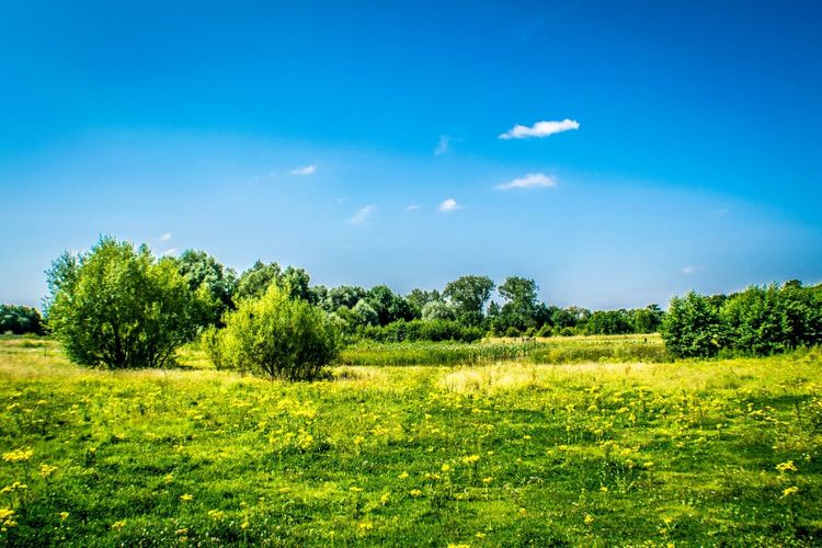 View of green landscape in forest