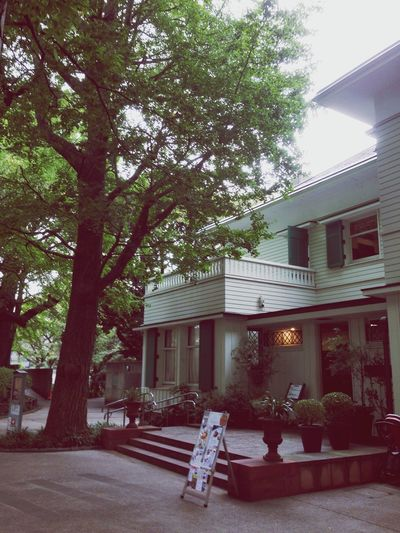 Tree Building Exterior Architecture Built Structure Outdoors No People Fast Food Yamate Yokohama Japan