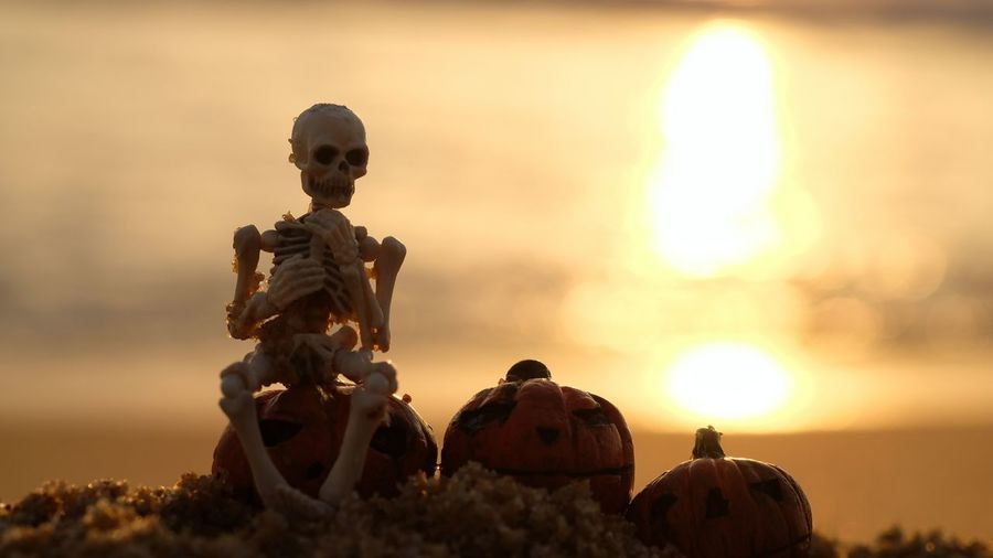 Halloween Horror Cute Toy Pumpkin Sunlight Skeleton Festival Outdoor Blurred Background Dark Concept Day Funny Holiday Summer Object Ocean Sea Season  Abstract Splash Glitter October Model Meaning Statue Sunset Sky Close-up