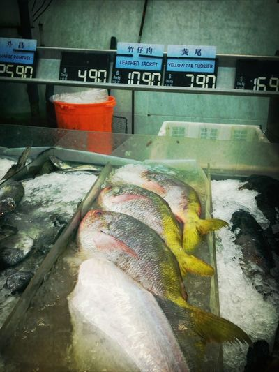 """All hail the SGD $10.90 """"Leather jacket"""" Singapore Fishes Supermarket Catchherfart"""