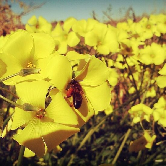 Spring Flowers Bees Pollen Honey MyPhotography Valencia Landscapes