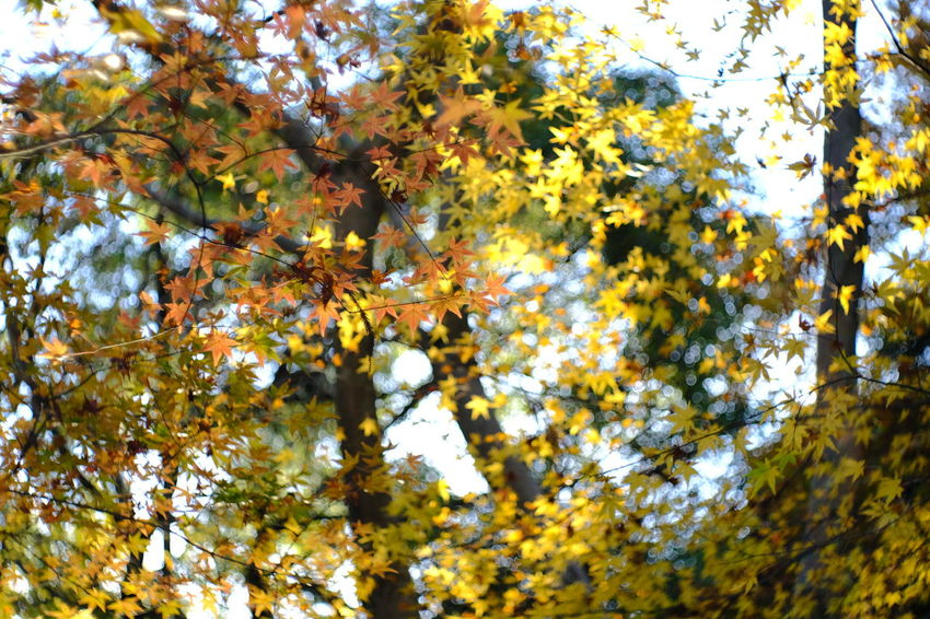 『15:18:23』 2016-12-02 Tree Nature Growth Beauty In Nature Autumn Change No People Branch Day Outdoors Tranquility Low Angle View Leaf Scenics Sky Close-up Hello Word Beauty Yellow Winter Tree Low Angle View