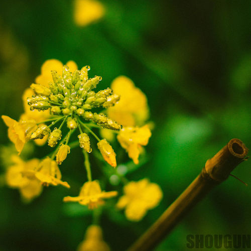Beauty In Nature EyeEmNewHere Flower Growth Nature No People Outdoors Yellow