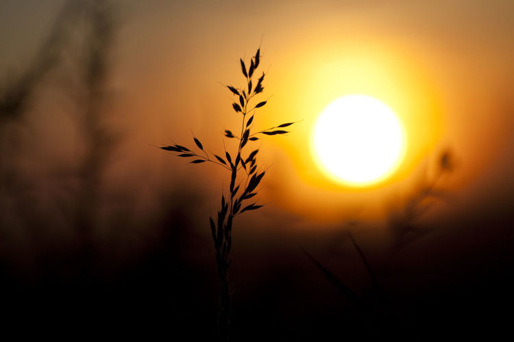 Sunrise silhouettes Beauty In Nature Close-up Fields Golden Golden Hour Macro Macro Beauty Macro Photography Morning Light Nature Nature Photography Naturelovers Outdoors Plant Scenics Silhouette Silhouette Silhouettes Sun Sunlight Sunrise Sunset The Great Outdoors - 2017 EyeEm Awards Tranquil Scene