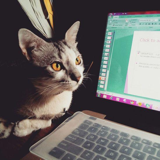 My companion for tonight Cat Eyemcat Cat♡ Catoftheday Cat Lovers Cat Eyes Friday Fridaynight