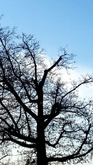 Tree Branch Silhouette Sky Close-up