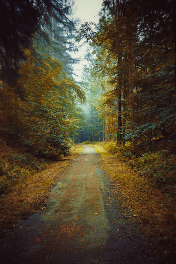 Dirt road amidst trees in forest during autumn