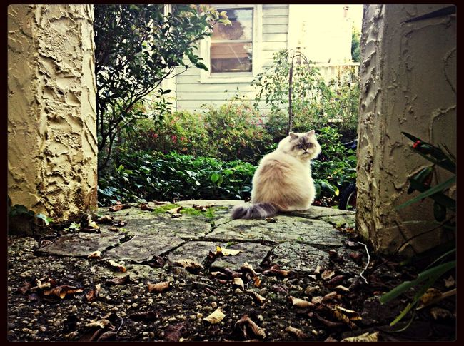 naughty cat Cat♡ Blue Mountains