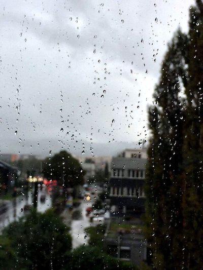 Rain Wet Drop
