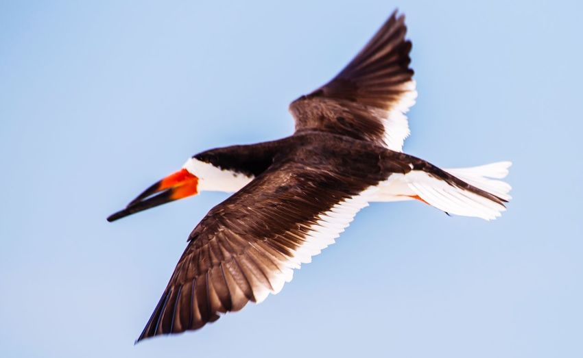Gulls Sea Black