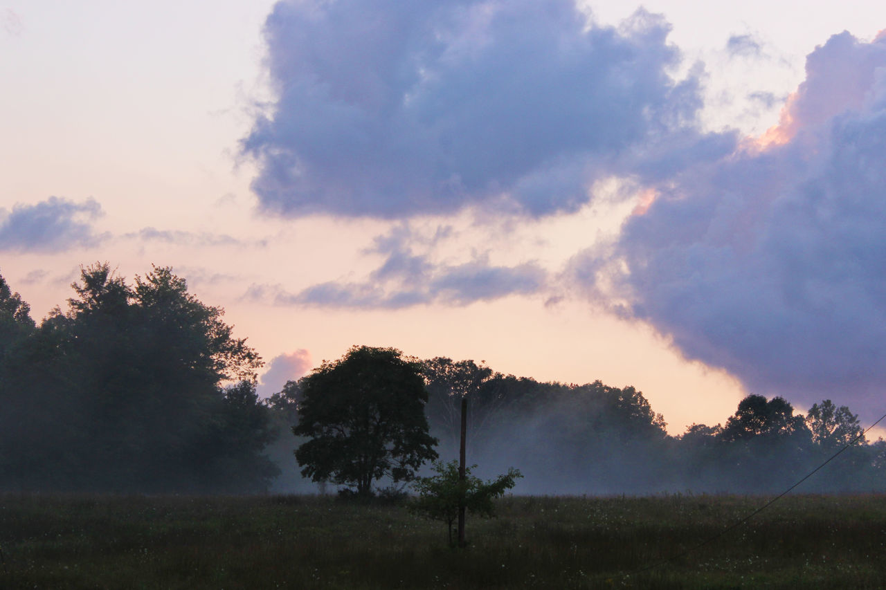 Foggy Night Foggy Weather Beauty In Nature Cloud - Sky Day Foggy Foggy Day Foggy Landscape Foggy Morning Grass Growth Idyllic Landscape Nature No People Outdoors Scenics Sky Sunset Tranquil Scene Tranquility Tree