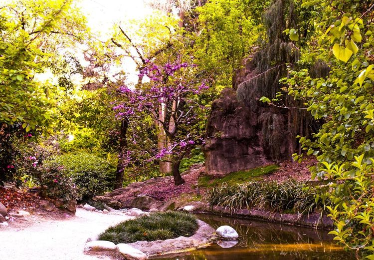 Looking for Fairies Plant Tree Growth Nature Beauty In Nature No People Day Formal Garden Park - Man Made Space Outdoors Tranquility Garden