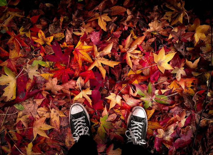 Autumn leaves 🍁My Year My View Autumn Outdoors Red Colors Shoes Converse Yellow Amazing View No People Beauty In Nature TakeoverMusic Out Of The Box