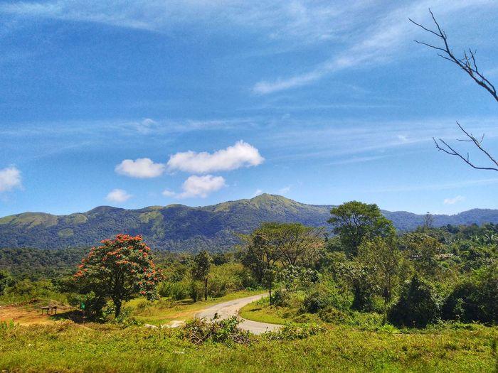 Tree Mountain Water Sky Mountain Range Landscape Cloud - Sky