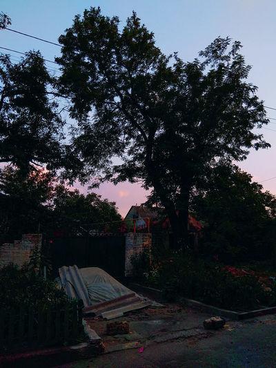 Tree Red Sky