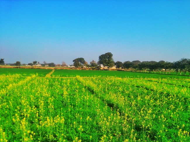 Feb 02,2016 12:28 PM. In Front Of My House Nature Landscape Phone Edits Smartphone Landscapes My Photography Beautiful Nature Greenery Phone Camera Android Photography I Love Nature My Clicks  My Click  PhonePhotography Phone Photography Landscape_photography Phoneclick Phonecamera Mobile Phone Photography Smartphone Photography
