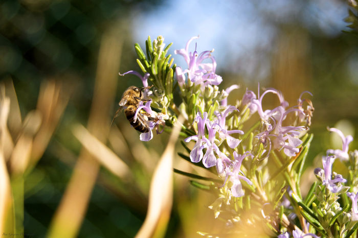 Animal Themes Animal Wildlife Animals In The Wild Beauty In Nature Bee Close-up Day Flower Flower Head Fragility Handheld Insect Longlens Nature No People One Animal Outdoors Plant Pollination Purple Zoomthelife