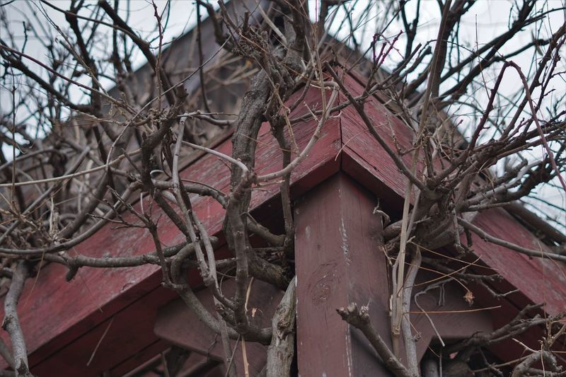 Low angle view of bare tree against abandoned building
