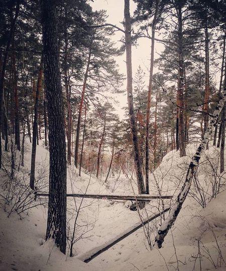 Фото на конкурс мобиларт омск сибирь русскийлес чернолучие лог зима снег февраль Omsk Siberia Winter Russianwood Snow Hollow