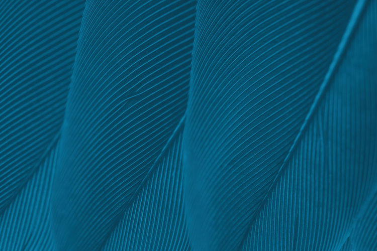 Backgrounds Pattern Close-up Textured  Abstract Full Frame Striped No People Blue Textile Extreme Close-up Textured Effect Macro Business Futuristic Design Technology Indoors  Well-dressed Suit Abstract Backgrounds