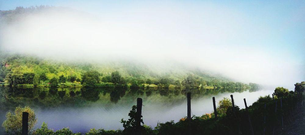 Mosel Fluss Weinberg Ufer Grün Wasser Berge Radtour Sonne