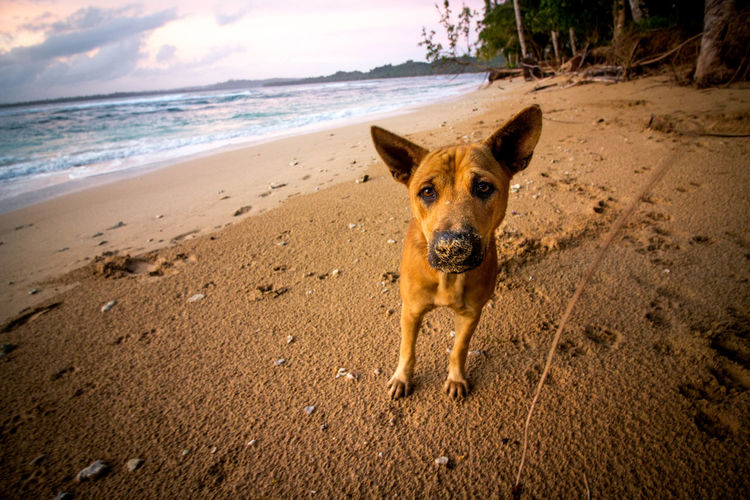 Cute dog on beach
