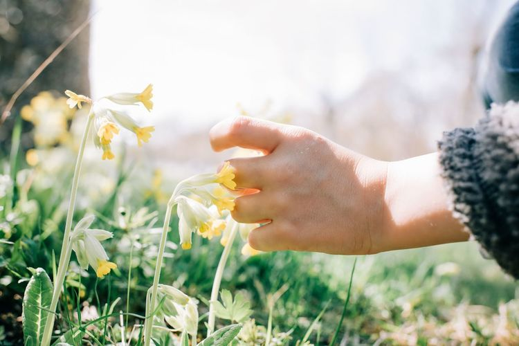 Close-up of hand holding flowering plant on field