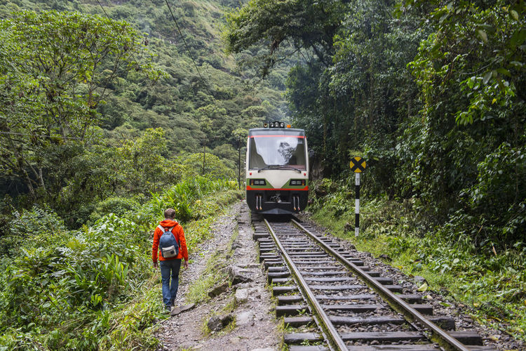 Rear view of train on railroad track amidst trees