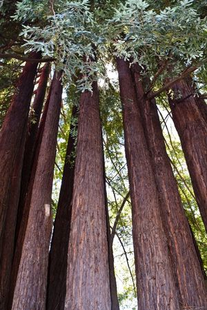 Sonoma Sonoma County Sonomacounty Wine Wine Tasting Trees Tall Nature California Cali Pattern Pieces