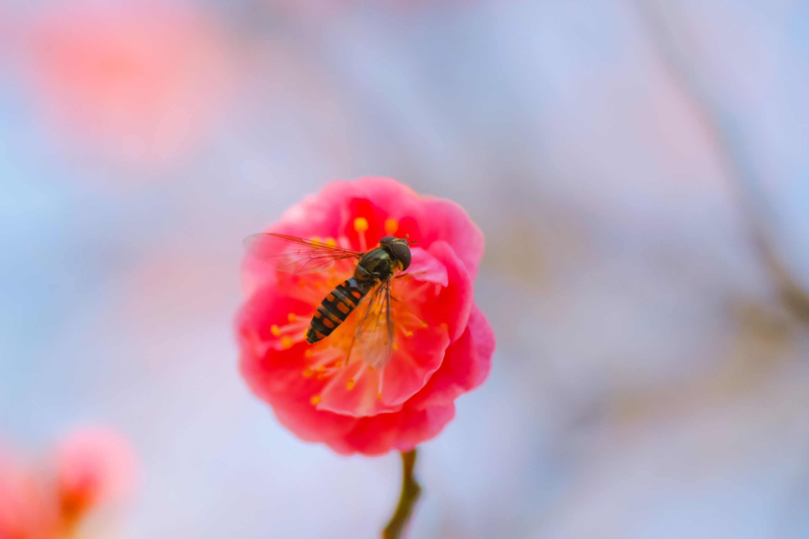 flower, nature, fragility, freshness, beauty in nature, growth, petal, animal themes, one animal, insect, animals in the wild, close-up, flower head, no people, day, plant, animal wildlife, pollen, outdoors, pollination, buzzing