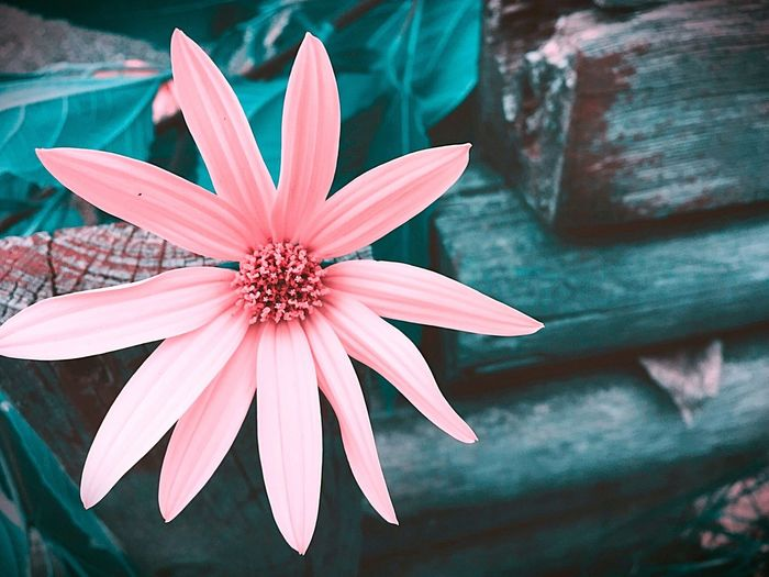 Flower Fine Art Photography - Wildflowers Redone Floral Fine Art Photography Flower Photography Flowers Flower Nature_collection Fine Art Pink Color Green Pink Pink Flower Pretty♡ Beautiful Nature Beautiful Beauty Florals Flower Petals Artistic Artistic Photo Artistic Expression Creative Wooden Texture Background Unique Beauty Perspective Photo